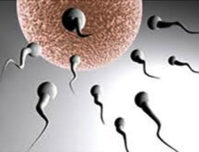 Description: infertility13.jpg