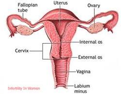 infertility8.jpg